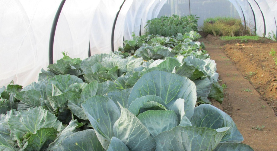 Organic Vegetables are grown for staff and guests.